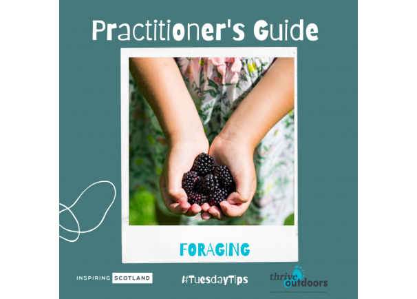 A Practitioner's Guide: Foraging