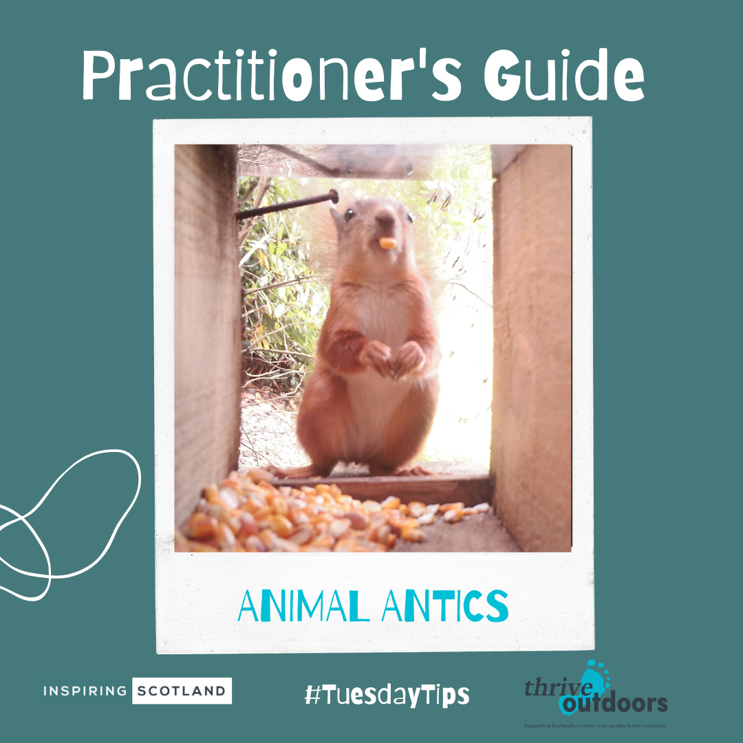 A Practitioner's Guide: Animal antics